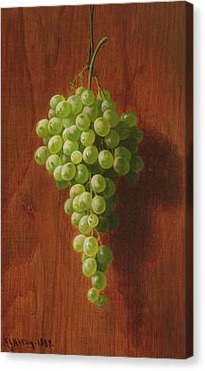 Grapes   Green Canvas Print