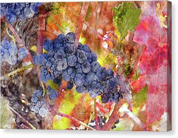 Grapes In The Vineyard Canvas Print by Brandon Bourdages