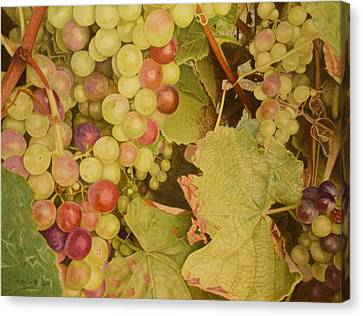 Grapes On A Vine Canvas Print