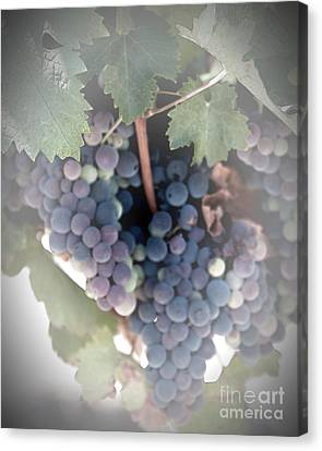 Grapes On The Vine I Canvas Print by Sherry Hallemeier
