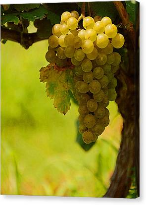 Grapes Canvas Print by Travis Aston