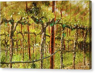 Grapes Vines In Vineyard During Spring Canvas Print by Brandon Bourdages