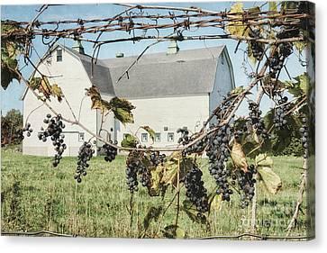 Purple Grapes Canvas Print - Grapevine by Alison Sherrow I AgedPage