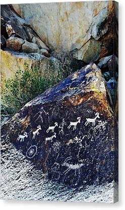 Bighorn Canyon National Recreation Area Canvas Print - Grapevine Canyon Bighorn Sheep Petroglyphs Portrait by Kyle Hanson