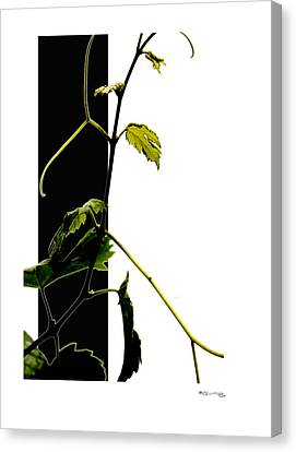 Grapevine Collage Canvas Print by Xoanxo Cespon