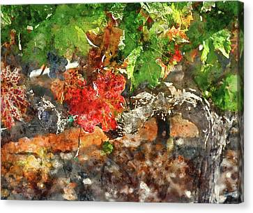 Grapevine In The Autumn Season Canvas Print by Brandon Bourdages