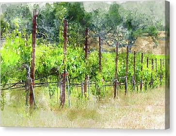 Grapevines In California Canvas Print by Brandon Bourdages