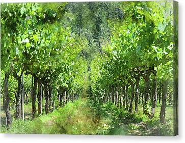 Grapevines In Spring Canvas Print by Brandon Bourdages