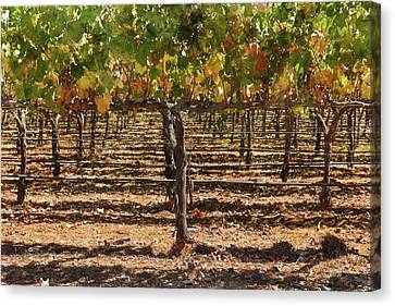 Grapevines In The Fall Canvas Print by Brandon Bourdages