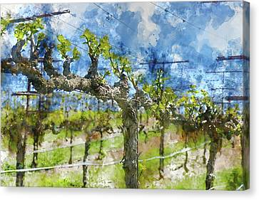 Grapevines In The Spring Canvas Print by Brandon Bourdages