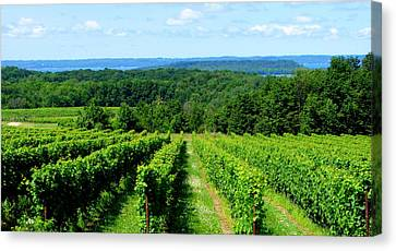 Grapevines On Old Mission Peninsula - Traverse City Michigan Canvas Print by Michelle Calkins