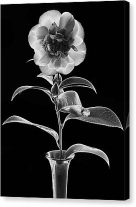 Graphic Camellia Canvas Print by Terence Davis