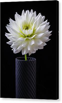 Graphic Dahlia Canvas Print by Garry Gay