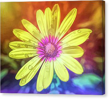 Pretty Flowers Canvas Print - Graphic Rainbow Yellow Daisy by Aimee L Maher Photography and Art Visit ALMGallerydotcom