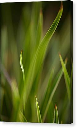 Grass Abstract 1 Canvas Print by Mike Reid