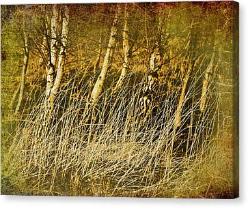 Grass And Birch Canvas Print by Meirion Matthias