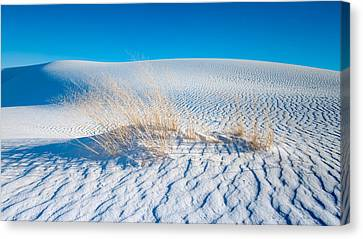 Grass And Dunes Canvas Print by Joseph Smith