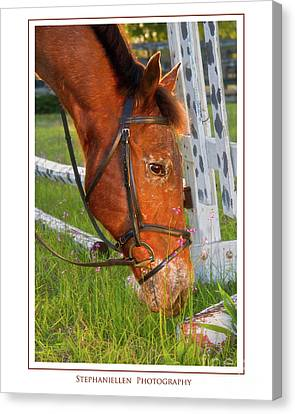 Grass And Flowers Canvas Print by Stephanie Hayes