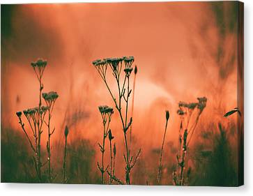 Grass And Plants In The Morning Mist Canvas Print