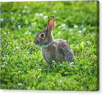 Canvas Print featuring the photograph Grass Hoppers by Bill Pevlor