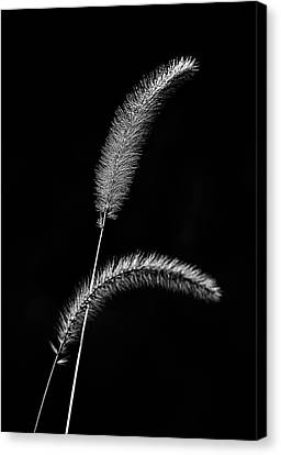 Grass In Black And White Canvas Print