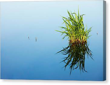 Grass In Blue Canvas Print by Todd Klassy