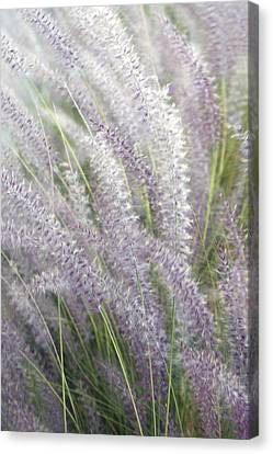 Canvas Print featuring the photograph Grass Is More - Nature In Purple And Green by Ben and Raisa Gertsberg