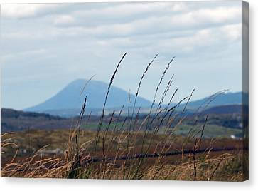 Grass Canvas Print by Paul  Mealey