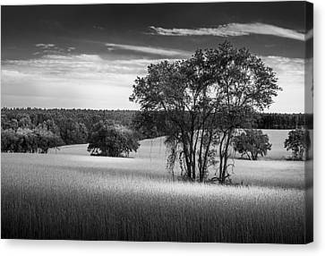 Barbed Wire Canvas Print - Grass Safari-bw by Marvin Spates