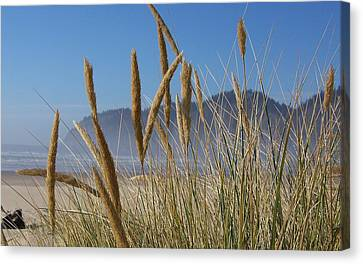 Canvas Print featuring the photograph Grass Seeds On The Beach by Angi Parks