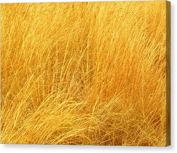 Grass Shades Canvas Print by Kim Zwick