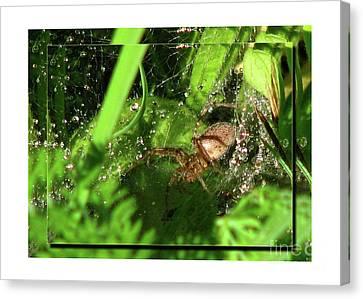 Canvas Print featuring the photograph Grass Spider by Deborah Johnson