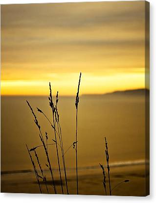 Grass Canvas Print by Svetlana Sewell