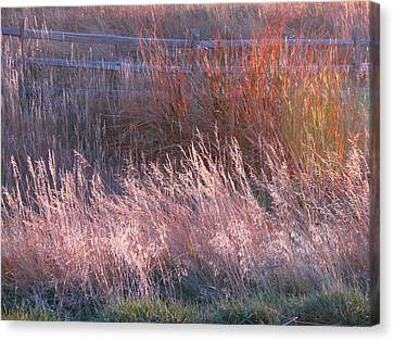 Grasses 1 Canvas Print
