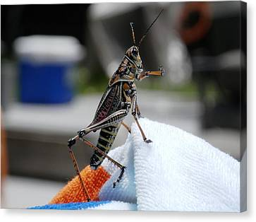 Dancing Grasshopper At The Pool Canvas Print