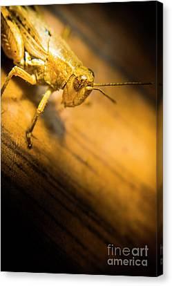 Grasshopper Under Shining Yellow Light Canvas Print by Jorgo Photography - Wall Art Gallery