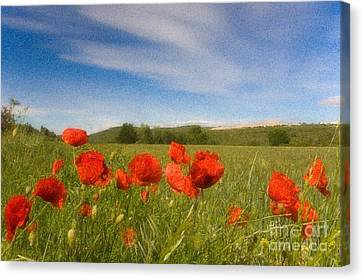Canvas Print featuring the photograph Grassland And Red Poppy Flowers by Jean Bernard Roussilhe