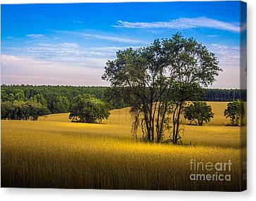 Grassland Safari Canvas Print