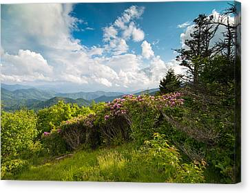 Grassy Ridge Roan Highlands Rhododendrons On The Appalachian Trail Canvas Print