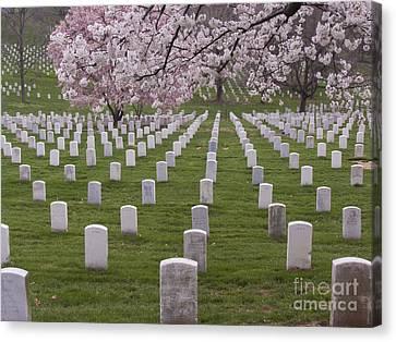 Graves Of Heros In Arlington National Cemetery Canvas Print by Tim Grams
