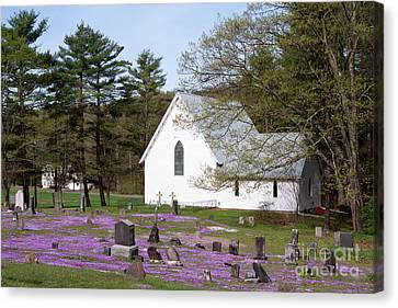 Graveyard Phlox Country Church Canvas Print by John Stephens