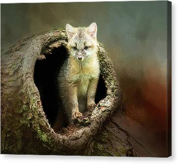 Gray Fox Cub Canvas Print by Susan Carter