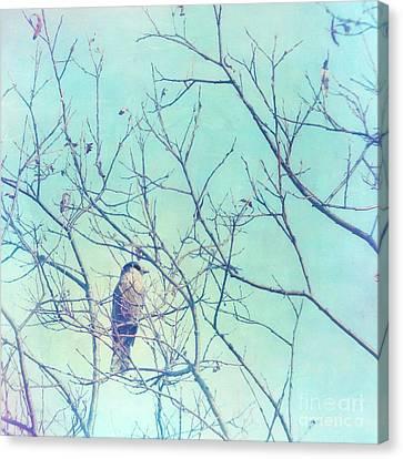 Gray Jay In A Tree Canvas Print by Priska Wettstein