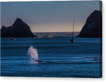 Blowhole Canvas Print - Gray Whale In Calm Bay by Garry Gay