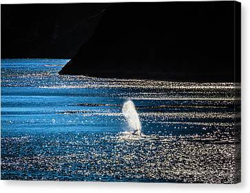Blowhole Canvas Print - Gray Whale Mist by Garry Gay