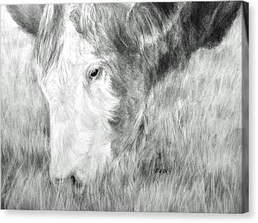 Canvas Print featuring the drawing Graze by Meagan  Visser