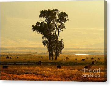 Bison Heard Canvas Print - Grazing Around The Tree by Adam Jewell
