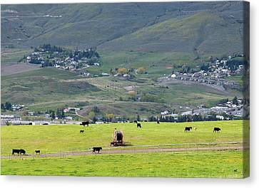 Early Spring Canvas Print - Grazing Cattle by Will Borden