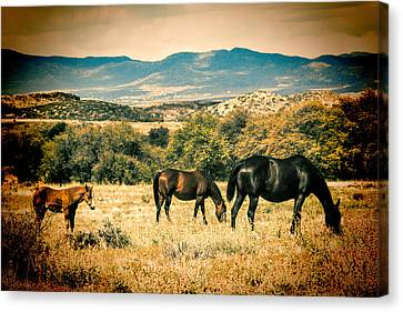 Grazing Canvas Print by Fred Larson