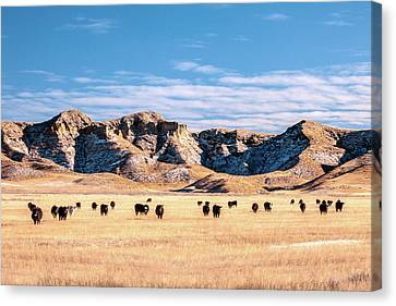 Grazing In The Badlands Canvas Print by Todd Klassy